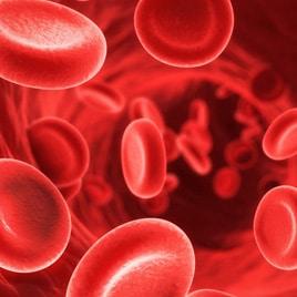 Vérkeringés, érrendszer