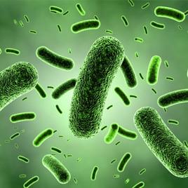 Vírus, baktérium, gomba